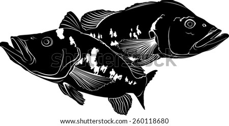 cichla - stock vector
