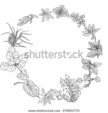 Circular pattern, wreath of herbs and herbs used in cosmetology - stock vector