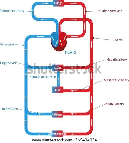 1 2018 02 26t1837460000 Methodnodecirculatory System