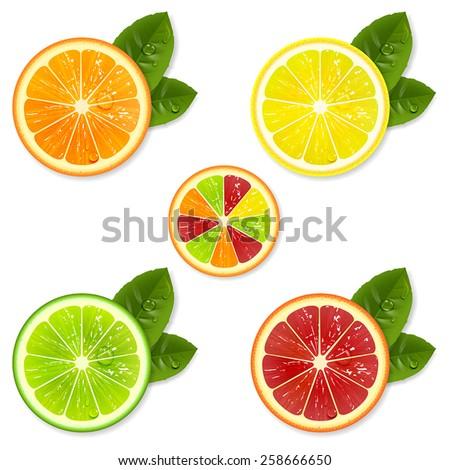 citrus fruit slice set of orange, lemon, lime, grapefruit - stock vector