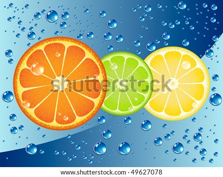 Citrus fruit slices in sparkling water - stock vector