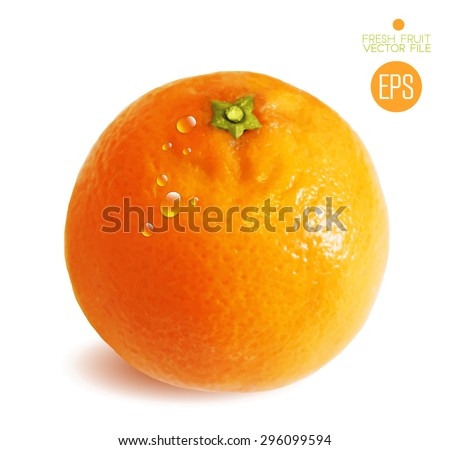 Citrus isolated on white background beautiful fresh fruit. Vector realistic art illustration for advertising packaging carton bottle banner wallpaper. Color yellow orange green. Colorful, bright - stock vector