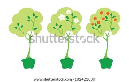 citrus tree in pot (with flowers and with fruits) - stock vector