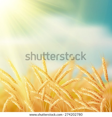 Close up of ripe wheat ears against sky. EPS 10 vector file included