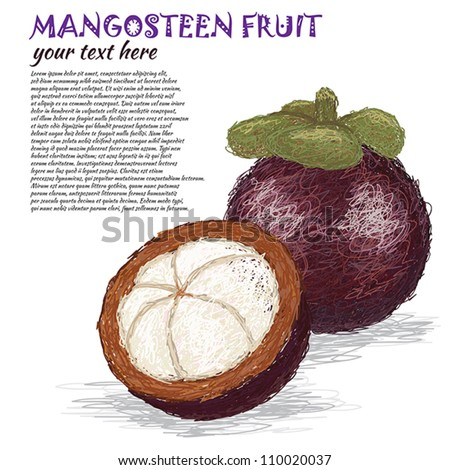 closeup illustration of fresh whole and half mangosteen fruit.