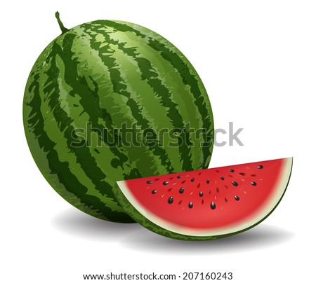 Closeup of watermelon (whole and slice) on white background. vector Illustration