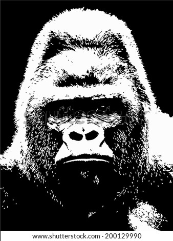 Closeup portrait of a gorilla male, severe silverback, on black background. The most dangerous and biggest monkey of the world. The chief of a gorilla family. Black and white vector illustration. - stock vector