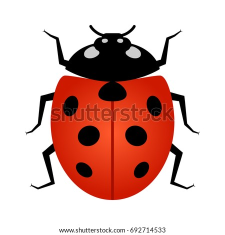 Coccinellidae ladybug ladybird beetle insect line stock vector coccinellidae ladybug or ladybird beetle insect line art vector icon for wildlife apps and websites ccuart Choice Image