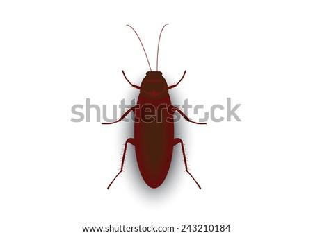 Cockroach - stock vector