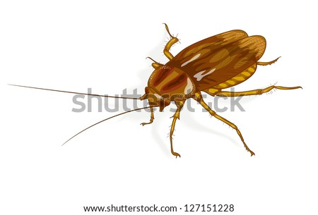 Cockroach. Vector illustration. - stock vector
