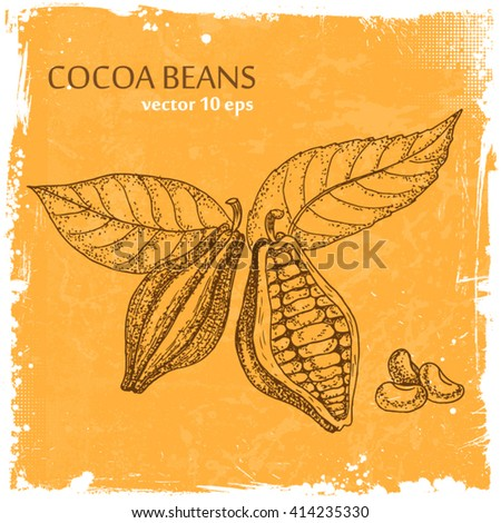 Cocoa beans illustration. - stock vector