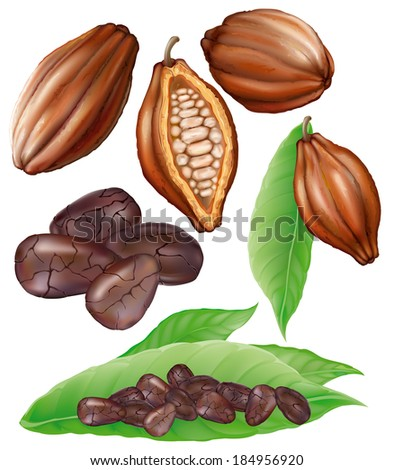 cocoa fruit, cut fruit, grains and leaves on a white background - stock vector