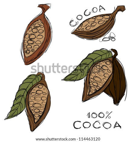 Cocoa or cacao bean - stock vector