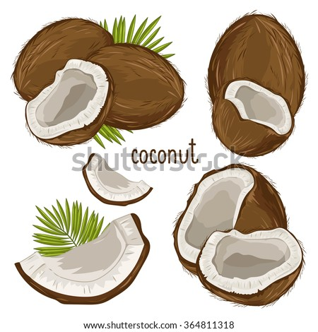 Coconut isolated closeup vector illustration with coconut leaves on white background