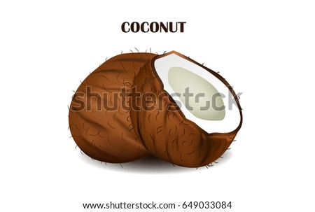Coconut isolated on white background. Realistic vector illustration.
