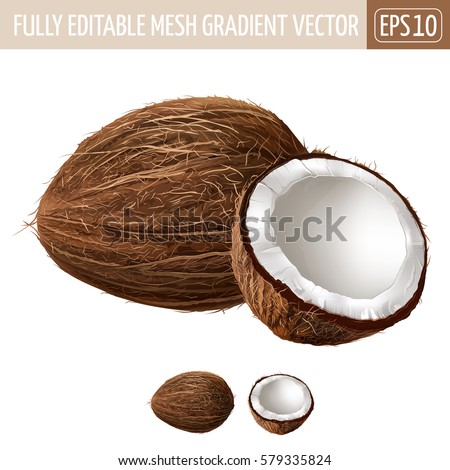 Coconut on white background. Vector illustration