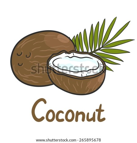 Coconut, slice of coconut and palm leaf with an inscription - stock vector
