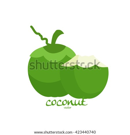 coconut vector