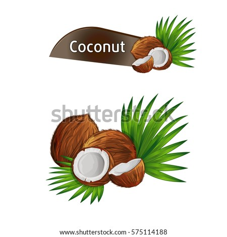 Coconut with half and green palm leaves set isolated on white background vector illustration. Organic food ingredient, natural tropical product. Coconut fruit with green palm leaves collection.
