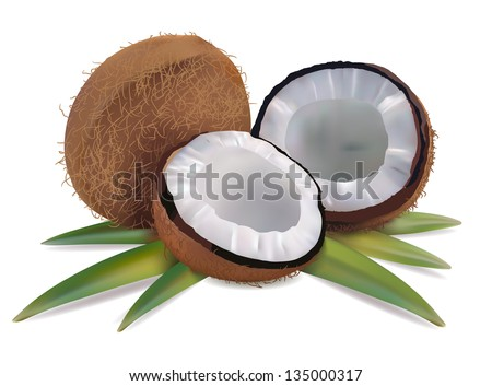 Coconut with leaves on a white background vector