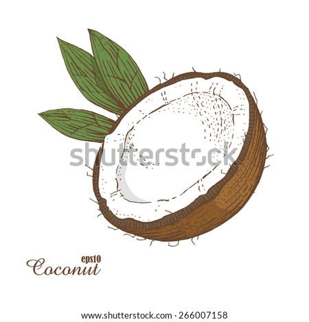Coconut. Woodcut style. Vector illustration. - stock vector