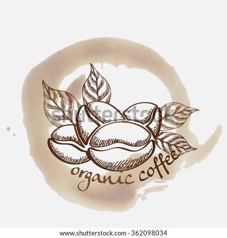 Coffee Bean Plant Vector