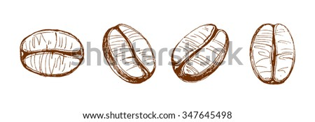 coffee beans, coffee, sketch of coffee beans, vector drawing - stock vector