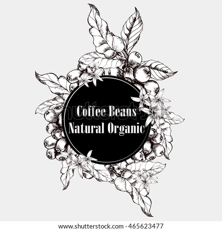 coffee bean plant vector wwwpixsharkcom images