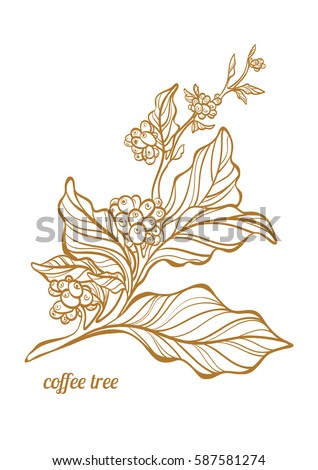 Gold bean stock images royalty free images vectors for How to draw a coffee bean