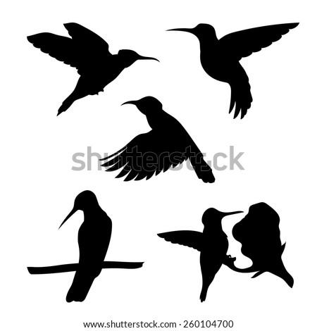 Colibri set of silhouettes vector - stock vector