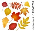 collection beautiful colourful autumn leaves isolated on white background. vector illustration - stock vector