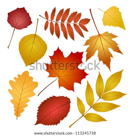 collection beautiful colourful autumn leaves isolated on white background. vector illustration