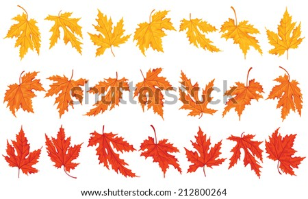 Collection beautiful colourful maple autumn leaves isolated. - stock vector