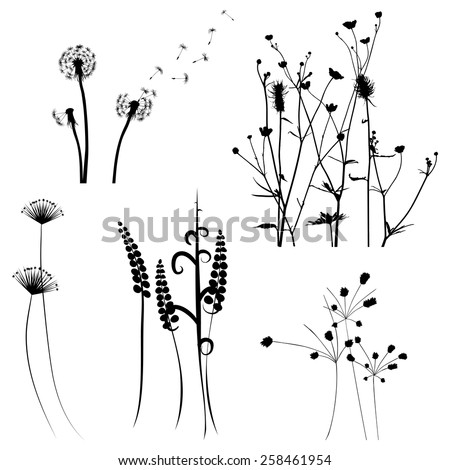 Collection for designers, meadow in summertime, plant vector set - stock vector