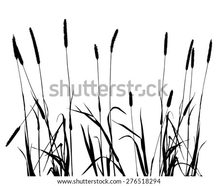collection for designers, plant vector illustration - stock vector