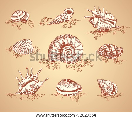 Collection graphic images seashell, vector set - stock vector