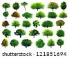 Collection green trees. Vector illustration - stock photo