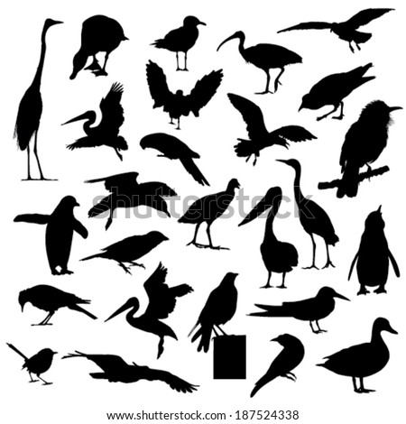Collection of bird silhouettes - stock vector
