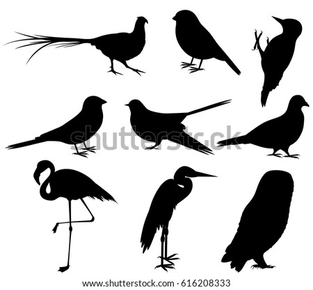 Pheasant Silhouette Stock Images, Royalty-Free Images ...