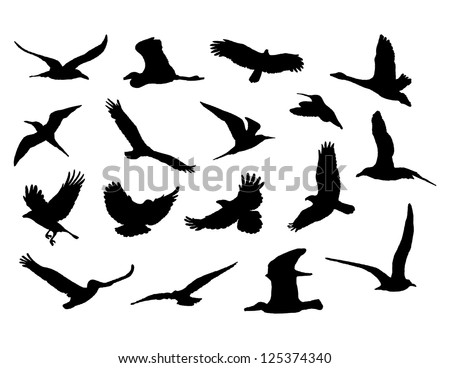 collection of birds. vector eps8 - stock vector