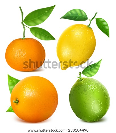 Collection of citrus fruits: lemon, lime, tangerine and orange with leaves. Vector illustration. - stock vector