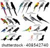 Collection of different species of parrots. Colour and black-and-white vector. - stock vector