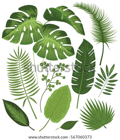 tropical leaves stock images, royaltyfree images  vectors, Natural flower