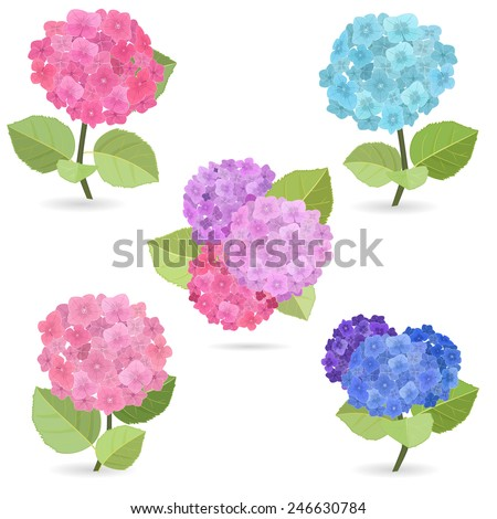 Collection of flowers, hydrangea - stock vector