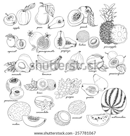 Collection of fruit in sketch style. Vector illustration for your design