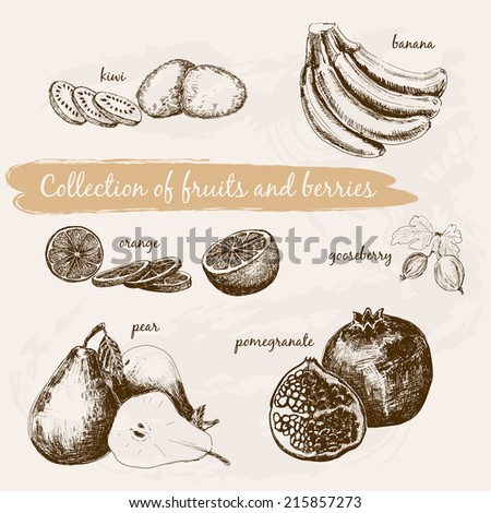 Collection of fruits and berries. Set of hand drawn graphic illustrations