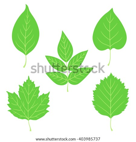 Collection of green leaves. Leaf icon, shape, label, symbol. Set of different leaves.  Vector illustration.