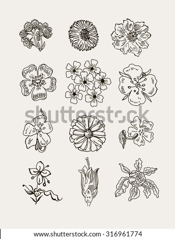 Collection of hand drawn flowers. Elements for your design. Pastel background. Vector illustration. - stock vector