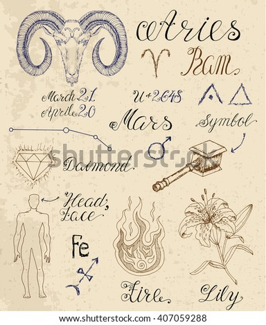 Collection of hand drawn symbols for astrological zodiac sign Ram or Aries. Line art vector illustration of engraved horoscope set. Doodle drawing and sketch with calligraphic lettering - stock vector