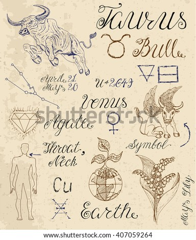 Collection of hand drawn symbols for astrological zodiac sign Taurus or Bull. Line art vector illustration of engraved horoscope set. Doodle drawing and sketch with calligraphic lettering - stock vector